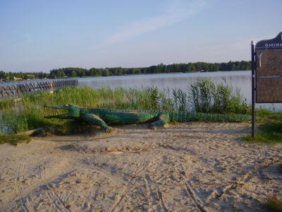 Jezioro Białe - krokodyl